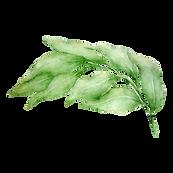 Les feuilles 3