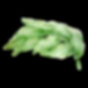 緑 癒し サロンドミカ