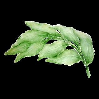 Blätter 3