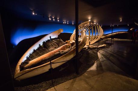 Island muzeum velryb Húsavík