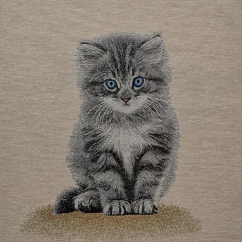 Carré - Bébé chat yeux bleu
