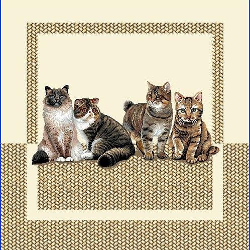 Bande de chat