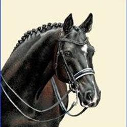 Carré - Cheval noir