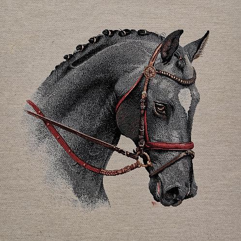 Carré - Cheval gris