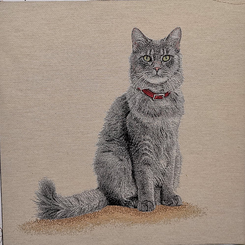 Le chat gris collier rouge