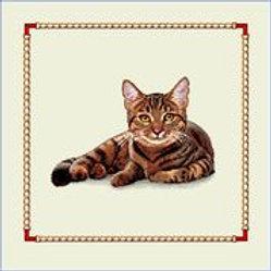 Chat tigré couché