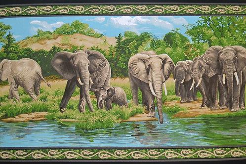 Éléphants au bord de l'eau