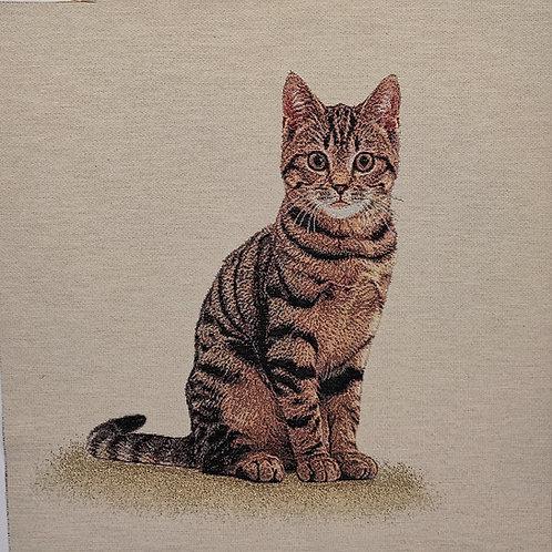 Le chat tigré marron