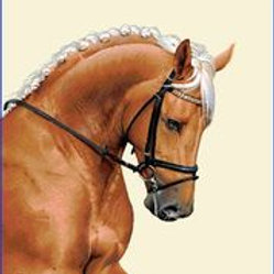 Carré - Cheval marron palomino
