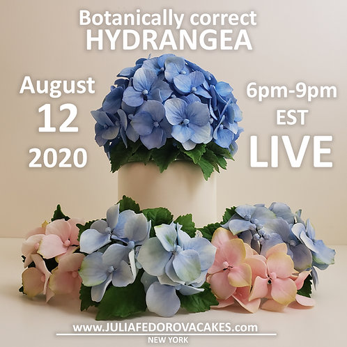 VIRTUAL Hydrangea class August 12, 2020