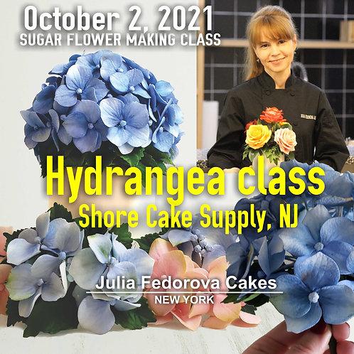 Hydrangea class October 2, 20121