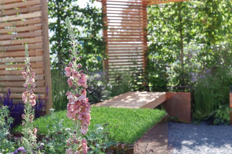 verbascum planting design.jpg