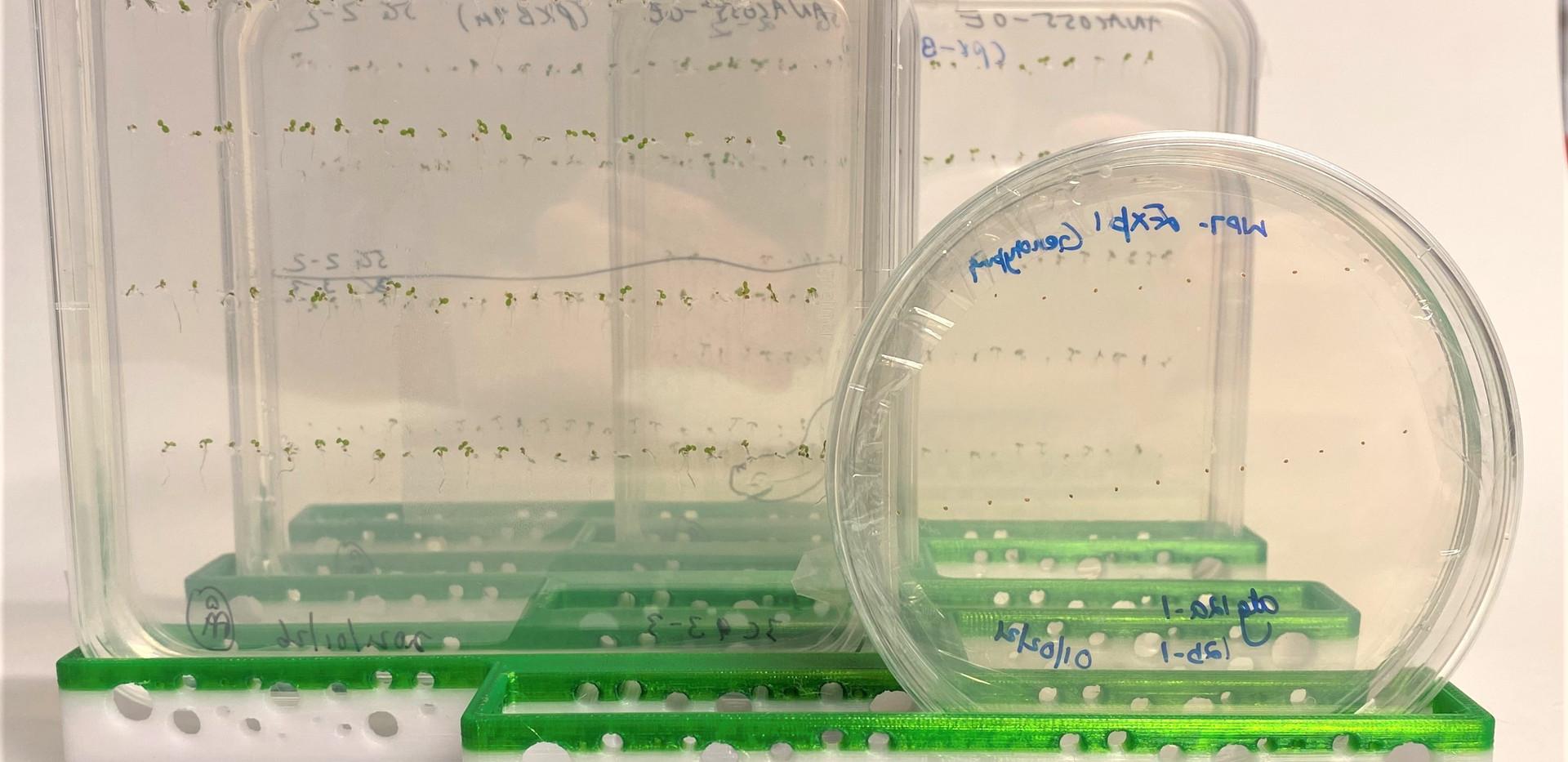 Holder for vertical Petri plates v3