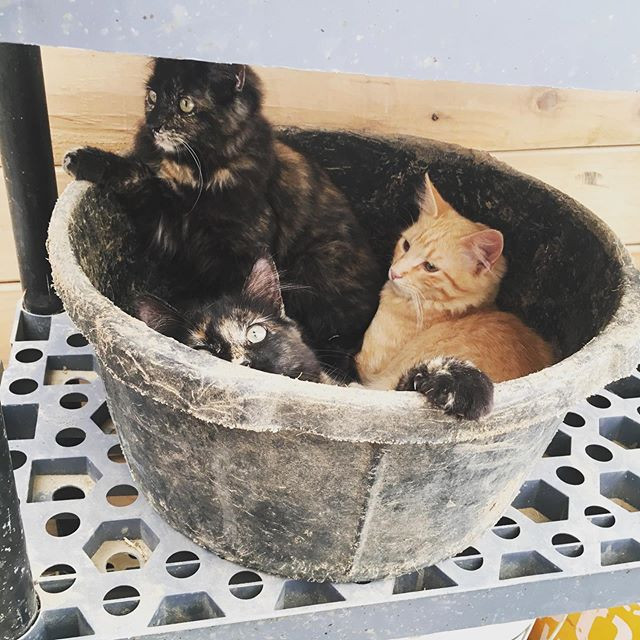Nothing like a bucket of #kittens to bri
