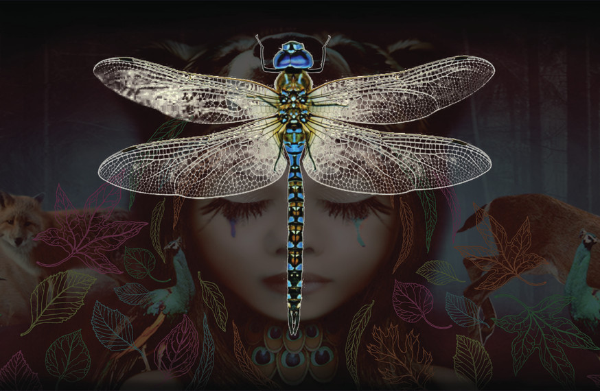 The journey of creating a collection. Dragonfly.