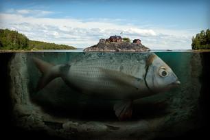 La vita è un pesce
