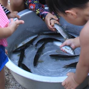 鮎 追加放流 34kg 土居川友釣り専用区