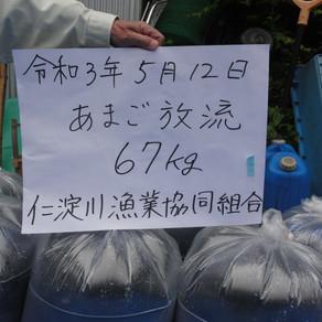 あまご放流 仁淀川地区 67kg