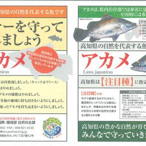 高知県はアカメを注目種に指定しています。