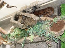 Viveiro temporário para serpentes