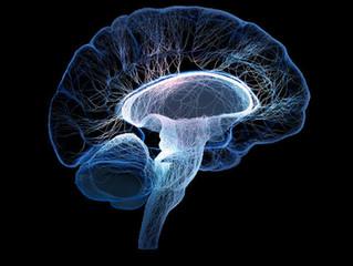 EUA iniciam o maior estudo sobre cérebro dos adolescentes