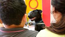 Cães ajudam na terapia de transtornos psiquiátricos