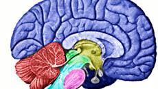 Demência vascular é mais comum que Alzheimer em idosos