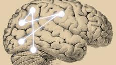 Cérebros mais eficientes compreendem melhor a língua mãe