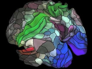 Novo mapa cerebral pode mudar os rumos da neurociência