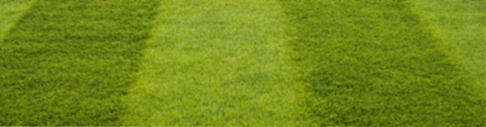 для сайта Пересвет трава1.jpg
