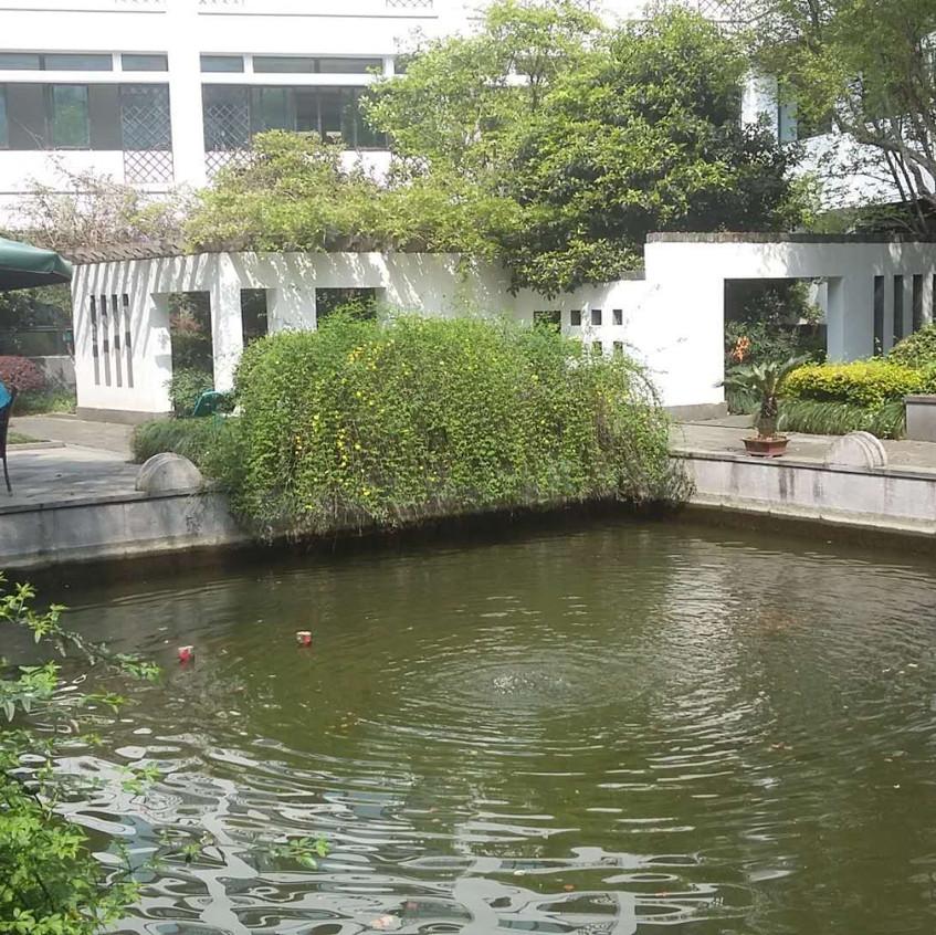 Antonio's Koi Pond in the courtyard