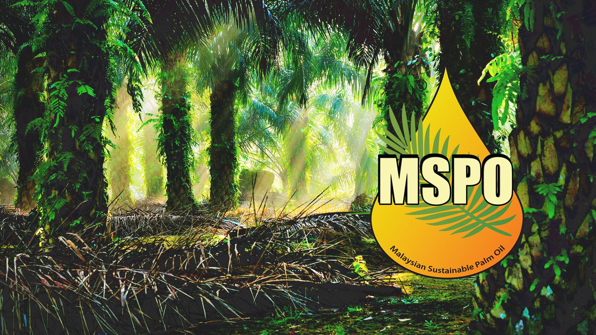 Image result for MSPO