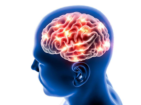 brain-1024x768.png