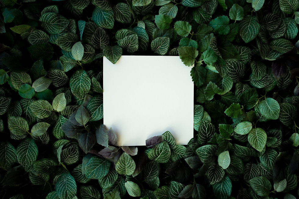 tropical-foliage-background-with-blank-c