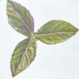 Artificial Plant (Drawing) #4
