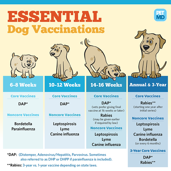 essential dog vaccines.png