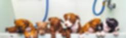 puppytub.jpg