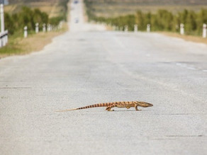 Lizards, Blood & Guilt: Hit-and-Run OCD