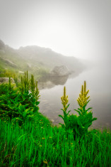 FOGGY LAKE