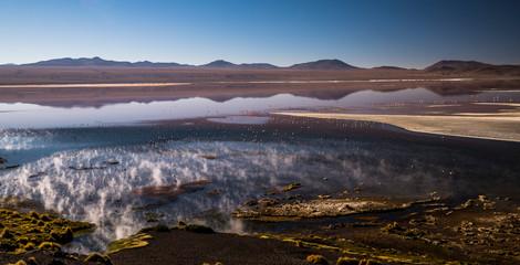 LAKE OF FLAMINGOS