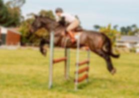 Petticoat lane Performance Horses Oamaru