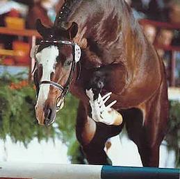 Carpaccio (x Caretino)