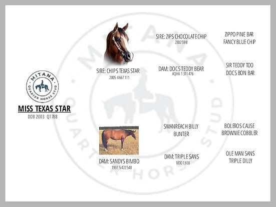 Miss Texas Star Pedigree.jpg