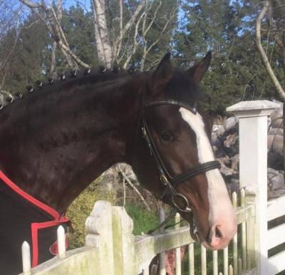 VIDEO: Stallion Lamondo GNZ and Logan Massie