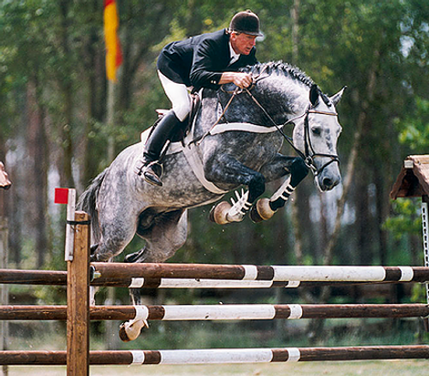 Calato Stallion Goldengrove