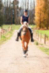 Golden Strike Stallion Maungatua Equestrian