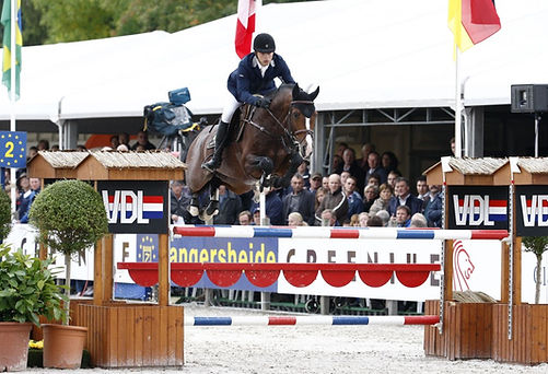 PL Performane Horse Stallions