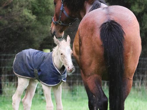 A BLONDE BABY: SP BLUE EYED GHOST x CORLANDO