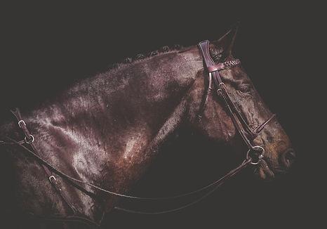Classic Z PL Perfomace Horses