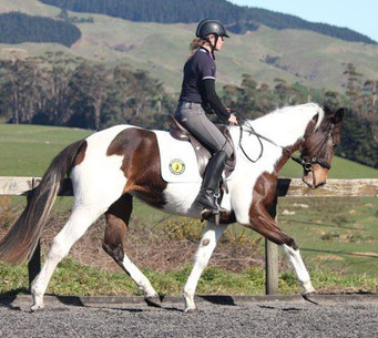 Whichita, Whisper Filly 3 1/2 years old. Started bareback by Bec Kerr, under guidance of Jody Hartston of Hartstone Equestrian.